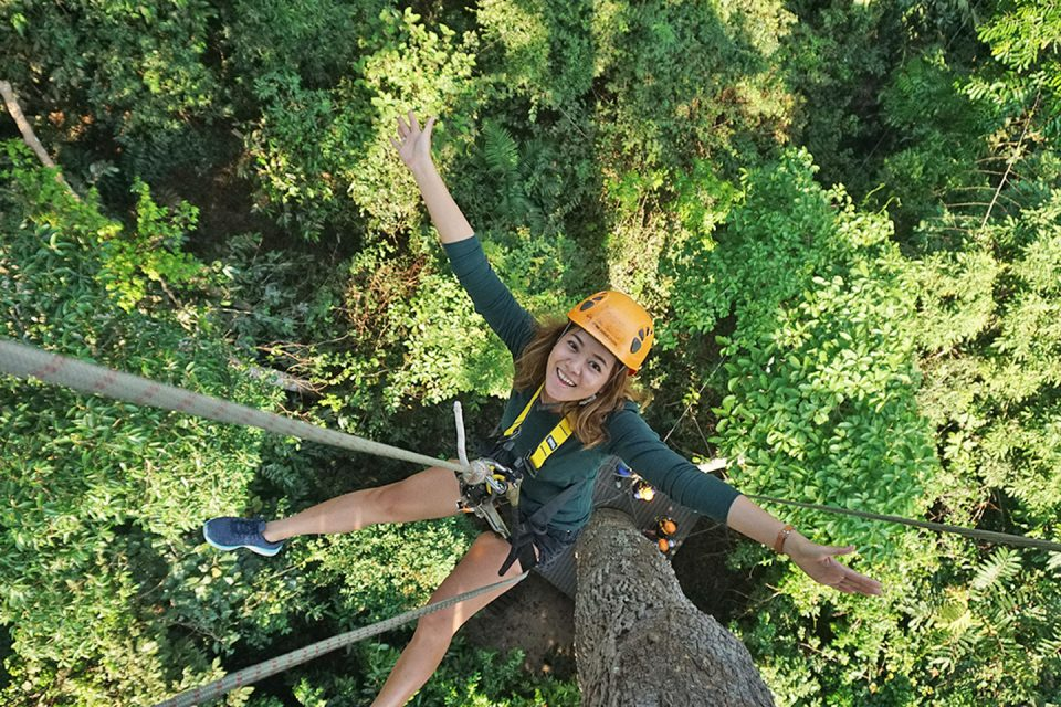 flight of the gibbon review the ultimate zipline experience