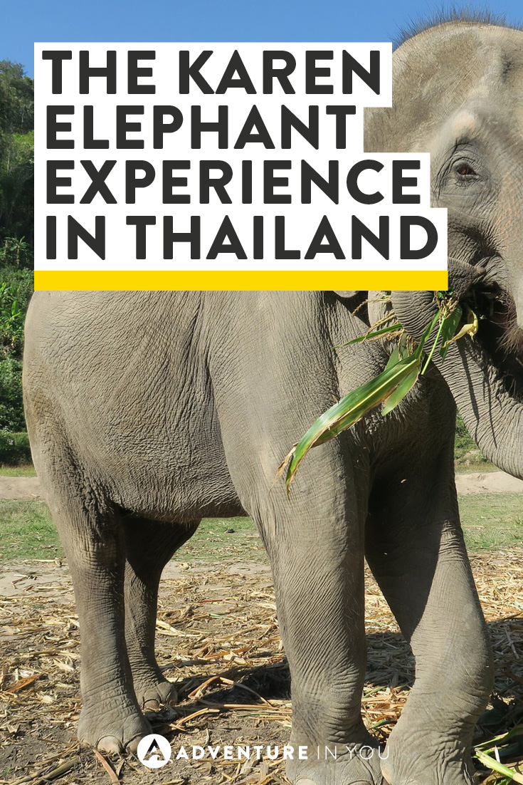 Experience elephants in their natural habitat in Thailand with the Karen Elephant Experience!