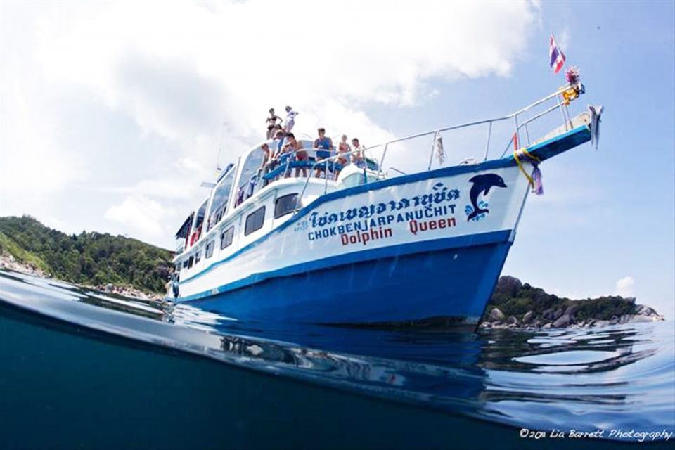 similan island dolphin queen liveaboard room