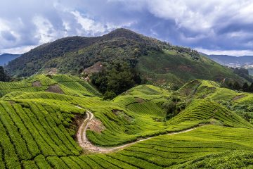 Trekking trails in Cameron Highlands