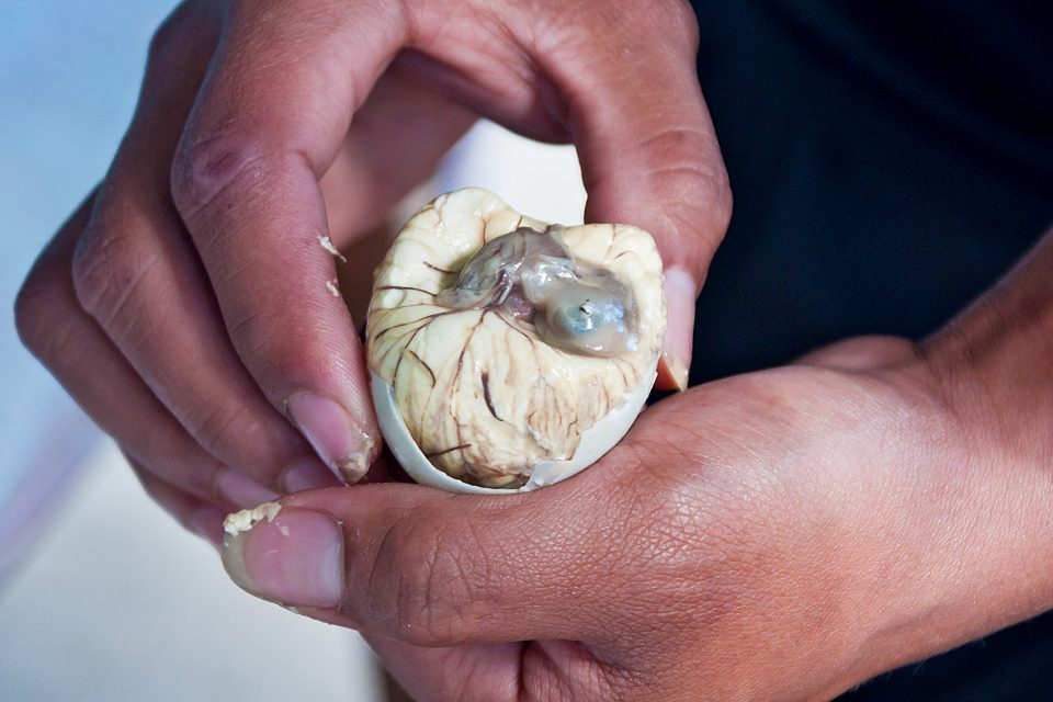 Close up of a duck embryo