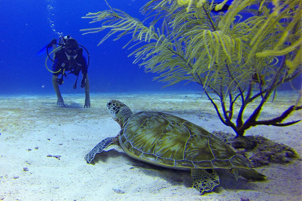 A diver and a turtle