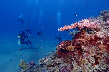 Divers next to a reef in blue waters