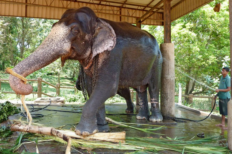 An elephant being washed