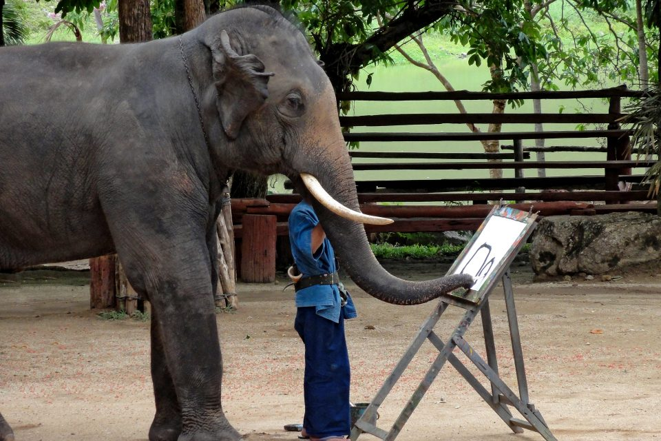 An elephant painting using it's trunk