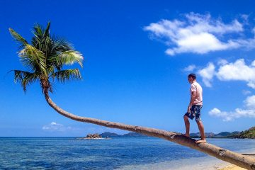 A man standing on a bent palm tree