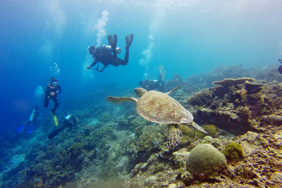 scuba diving in the gilis