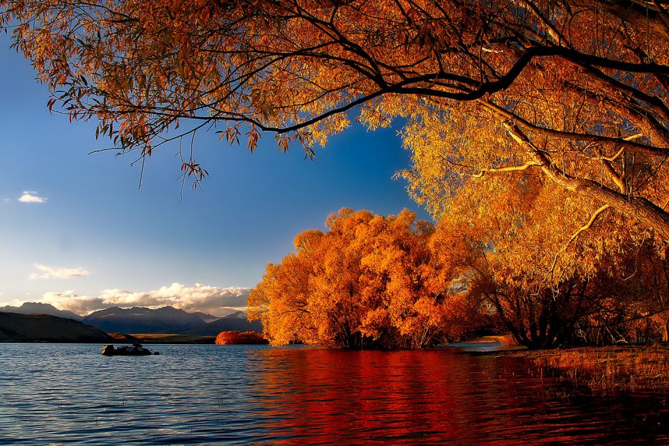 A lake and trees in autumn