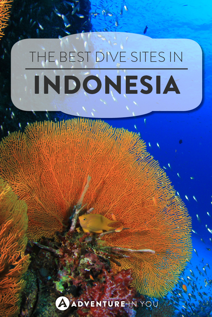 Indonesia Diving | Looking for the best scuba diving sites in Indonesia? Here are a few which you can't miss out on exploring!